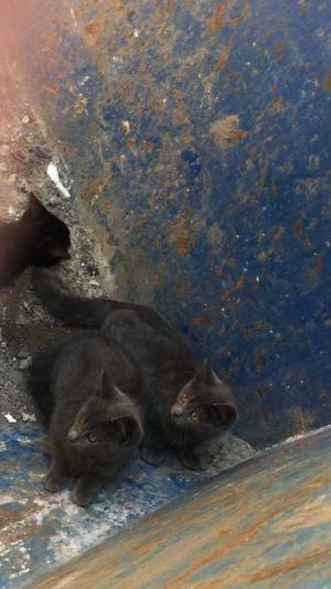 Leigh Journal: An animal rescue charity is campaigning for more people to neuter their pets after four kittens were found dumped in a skip. Click here to read more